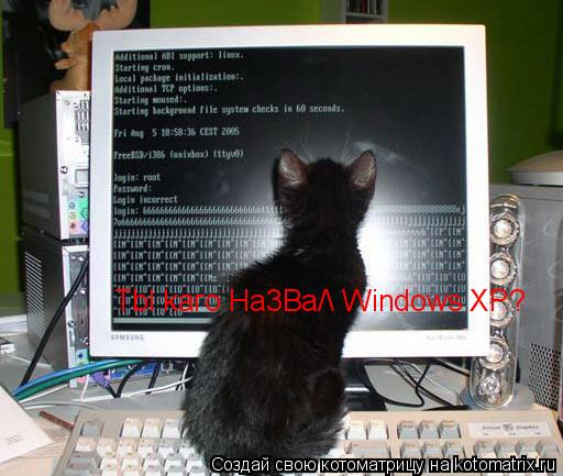 Котоматрица: Tbl kaгo Ha3Ba/ Windows XP?