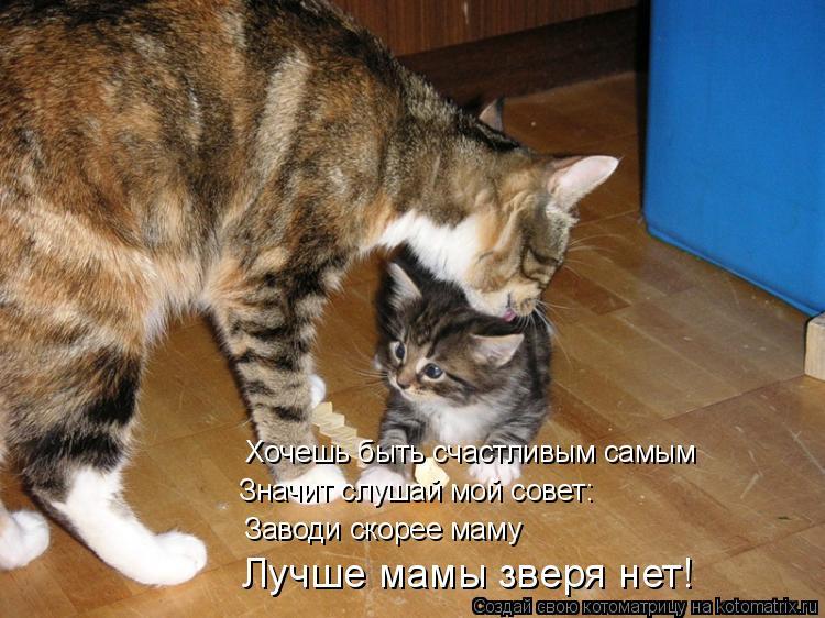 Котоматрица: Хочешь быть счастливым самым Значит слушай мой совет: Заводи скорее маму Лучше мамы зверя нет!