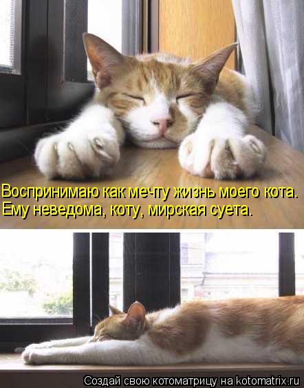 Котоматрица: Воспринимаю как мечту жизнь моего кота. Ему неведома, коту, мирская суета.