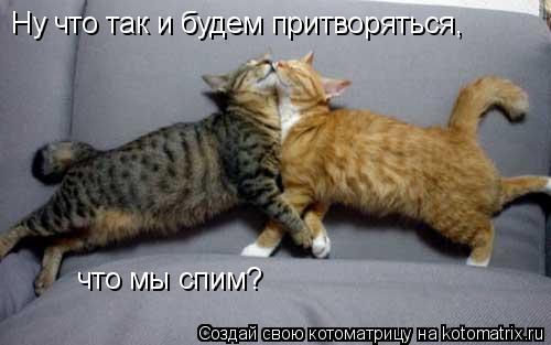 Котоматрица: Ну что так и будем притворяться, что мы спим?