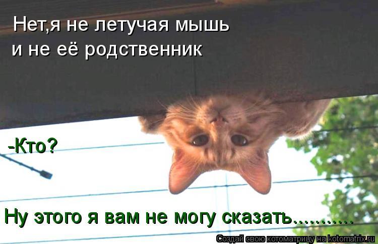 Котоматрица: Нет,я не летучая мышь и не её родственник -Кто? Ну этого я вам не могу сказать...........