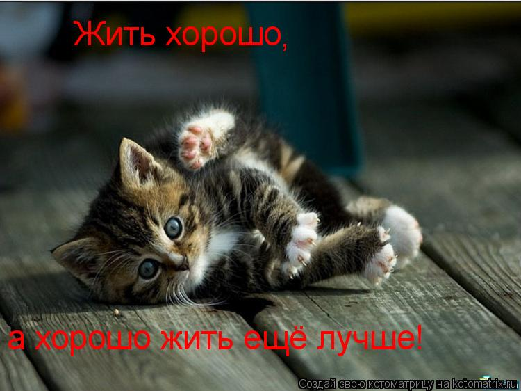 Котоматрица: Жить хорошо а хорошо жить ещё лучше! ,