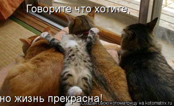 Котоматрица: Говорите что хотите, но жизнь прекрасна!