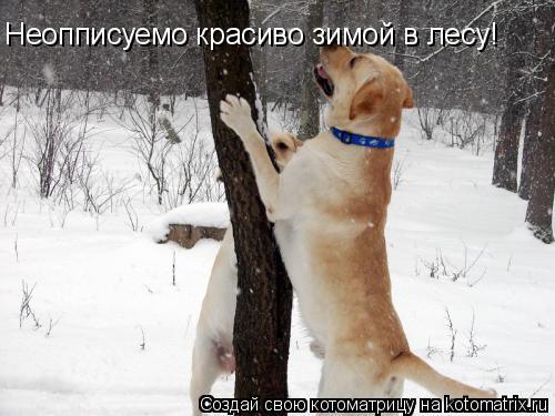 Котоматрица: Неопписуемо красиво зимой в лесу!