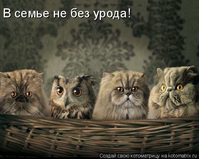Котоматрица: В семье не без урода!