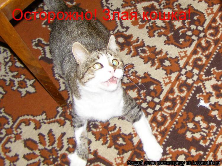 Котоматрица: Осторожно! Злая кошка!
