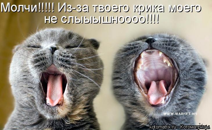 Котоматрица: Молчи!!!!! Из-за твоего крика моего не слыыышноооо!!!!
