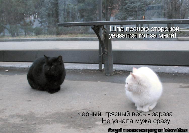 Котоматрица: Шла лесною стороной,  увязался кот за мной! Чёрный, грязный весь - зараза! Не узнала мужа сразу!