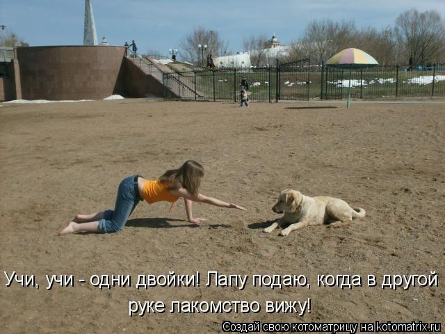 Котоматрица: Учи, учи - одни двойки! Лапу подаю, когда в другой руке лакомство вижу!