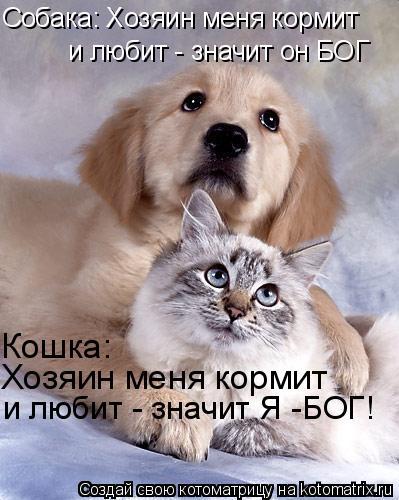 Котоматрица: Собака: Хозяин меня кормит и любит - значит он БОГ Кошка: Хозяин меня кормит  и любит - значит Я -БОГ!