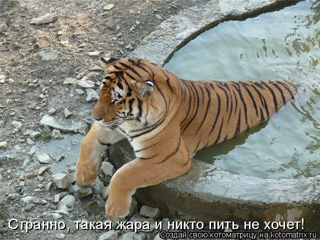 Котоматрица: Странно, такая жара и никто пить не хочет!