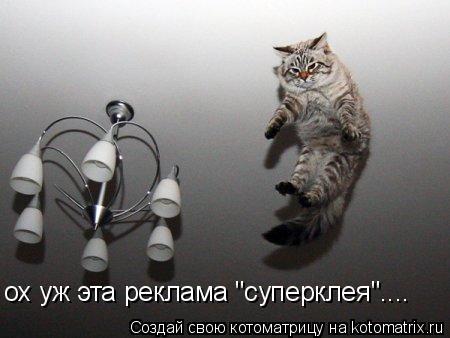 """Котоматрица: ох уж эта реклама """"суперклея""""...."""