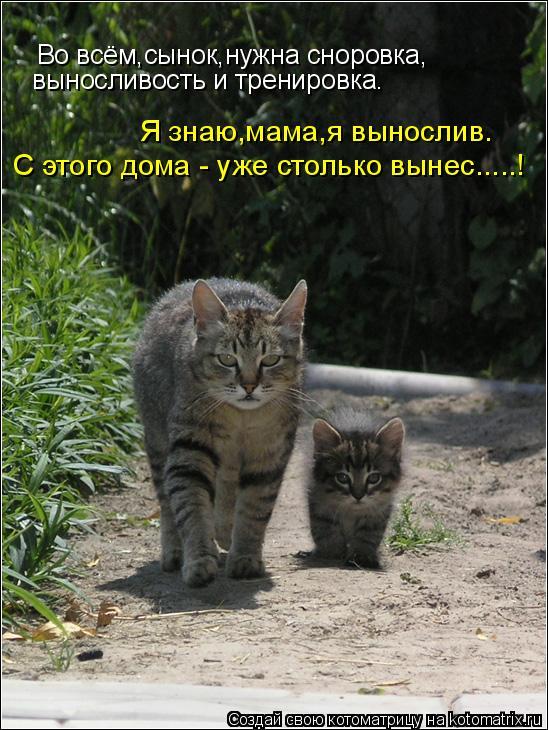 Котоматрица: Во всём,сынок,нужна сноровка, выносливость и тренировка. Я знаю,мама,я вынослив. С этого дома - уже столько вынес.....!