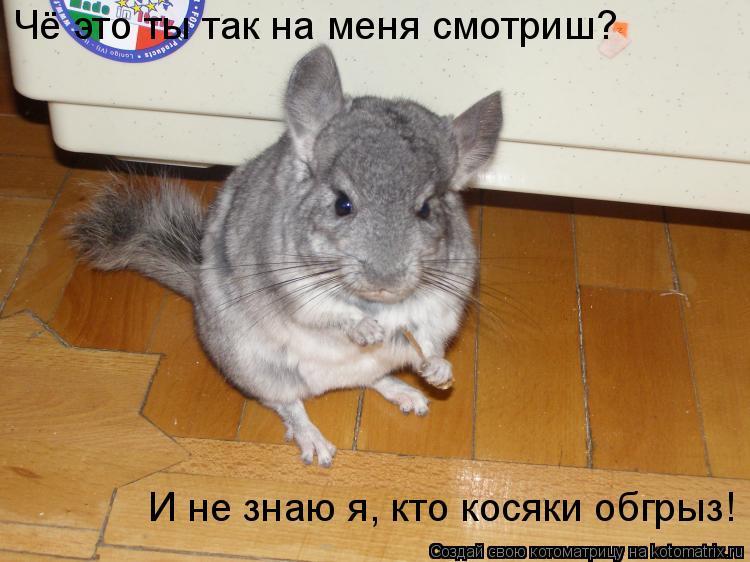 Котоматрица: Чё это ты так на меня смотриш?  И не знаю я, кто косяки обгрыз!