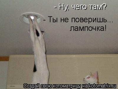 Котоматрица: - Ну, чего там? - Ты не поверишь... лампочка!