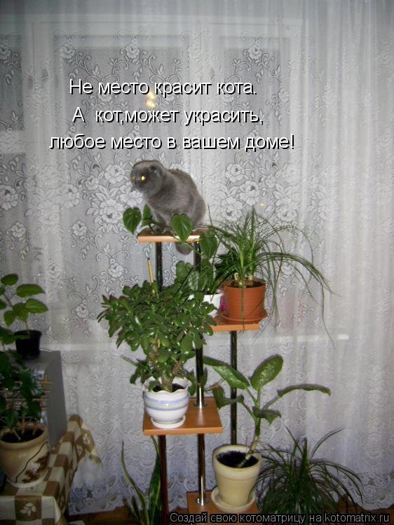 Котоматрица: любое место в вашем доме! А  кот,может украсить, Не место красит кота.