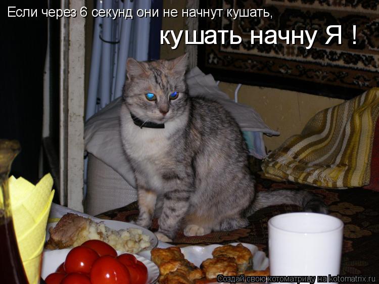 Котоматрица: Если через 6 секунд они не начнут кушать, кушать начну Я !