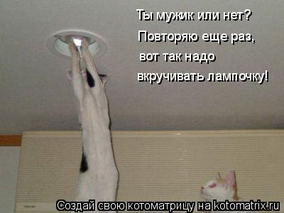 Котоматрица: Ты мужик или нет? Повторяю еще раз, вот так надо вкручивать лампочку!