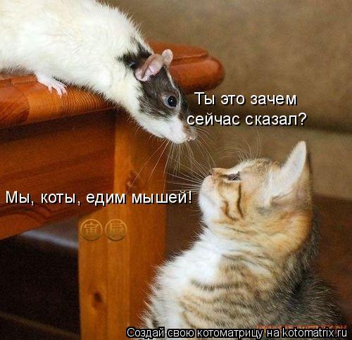 Котоматрица: Мы, коты, едим мышей! Ты это зачем  сейчас сказал?