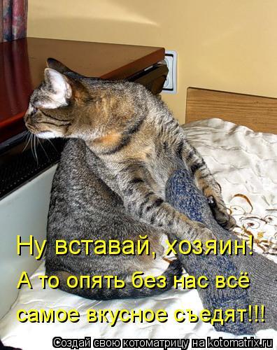Котоматрица: Ну вставай, хозяин!  А то опять без нас всё  самое вкусное съедят!!!