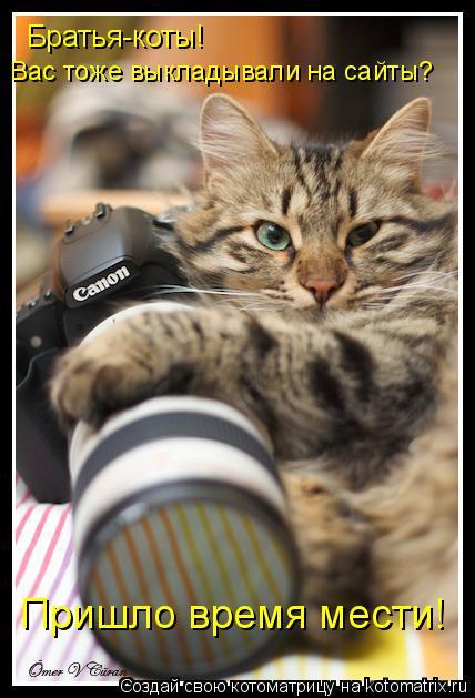 Котоматрица: Братья-коты!  Вас тоже выкладывали на сайты? Пришло время мести!