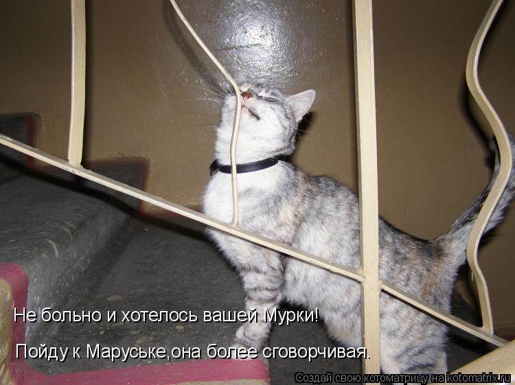 Котоматрица: Пойду к Маруське,она более сговорчивая. Не больно и хотелось вашей Мурки!