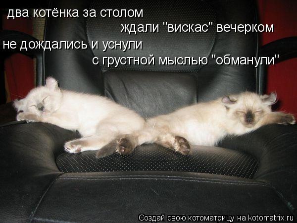 """Котоматрица: два котёнка за столом ждали """"вискас"""" вечерком не дождались и уснули с грустной мыслью """"обманули"""""""