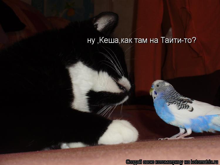 Котоматрица: ну ,Кеша,как там на Таити-то?