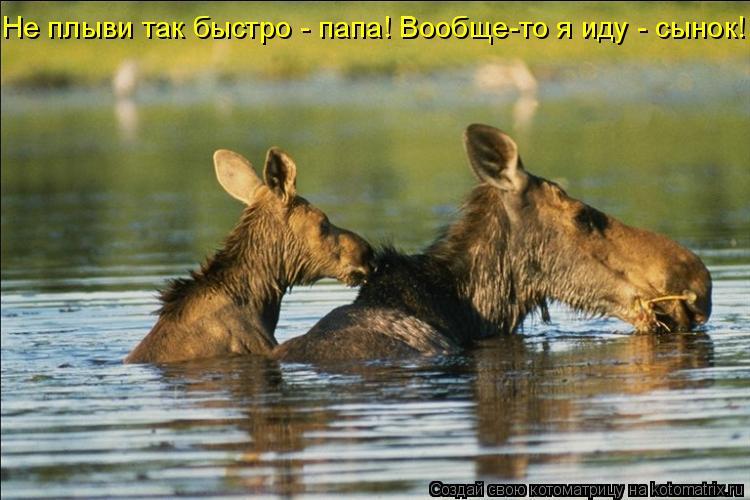 Котоматрица: Не плыви так быстро - папа! Вообще-то я иду - сынок!