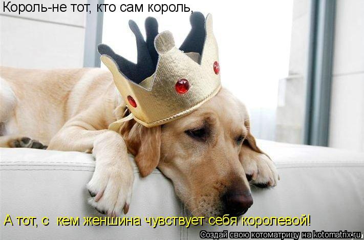 Котоматрица: Король-не тот, кто сам король, А тот, с  кем женшина чувствует себя королевой!