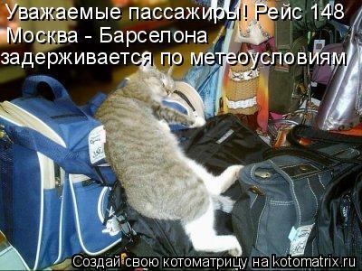 Котоматрица: Уважаемые пассажиры! Рейс 148  Москва - Барселона задерживается по метеоусловиям