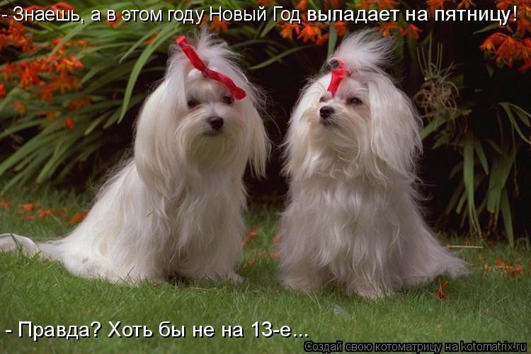 Котоматрица: - Знаешь, а в этом году Новый Год  выпадает на пятницу! - Правда? Хоть бы не на 13-е...