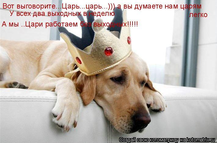 Котоматрица: Вот выговорите...Царь...царь...))) а вы думаете нам царям  легко У всех два выходных в неделю А мы ..Цари работаем без выходных!!!!!
