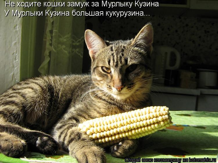 Котоматрица: Не ходите кошки замуж за Мурлыку Кузина У Мурлыки Кузина большая кукурузина...