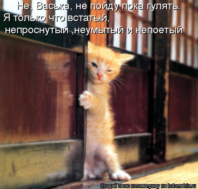Котоматрица: Не, Васька, не пойду пока гулять.  Я только что встатый,  непроснутый ,неумытый и непоетый