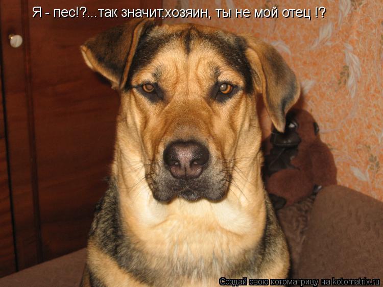 Котоматрица: Я - пес!?...так значит,хозяин, ты не мой отец !?