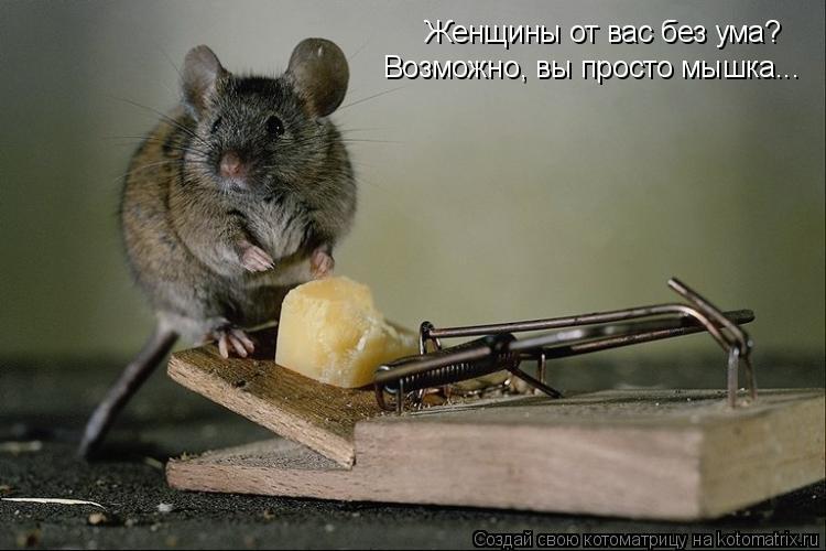 Котоматрица: Женщины от вас без ума? Возможно, вы просто мышка...
