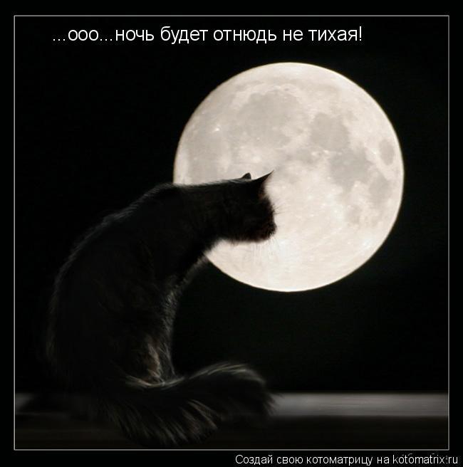 Котоматрица: ...ооо...ночь будет отнюдь не тихая!