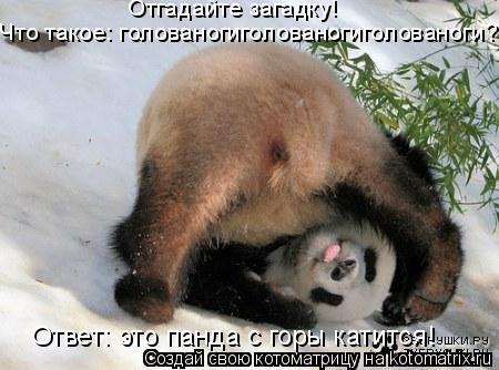 Котоматрица: Отгадайте загадку! Что такое: голованогиголованогиголованоги? Ответ: это панда с горы катится!