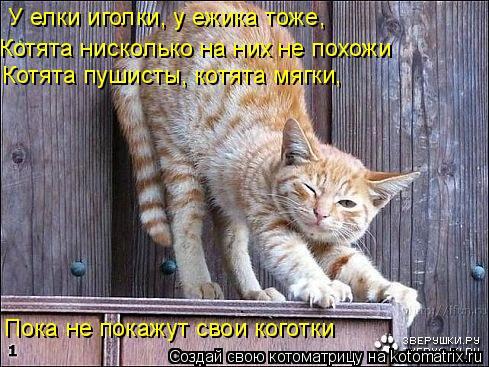 Котоматрица: У елки иголки, у ежика тоже,  Котята нисколько на них не похожи Пока не покажут свои коготки Котята пушисты, котята мягки,