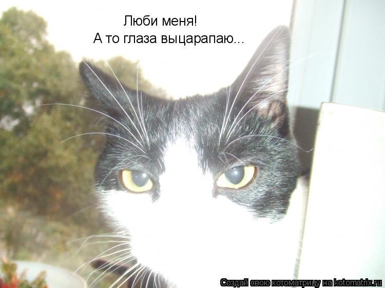 Котоматрица: Люби меня! А то глаза выцарапаю...