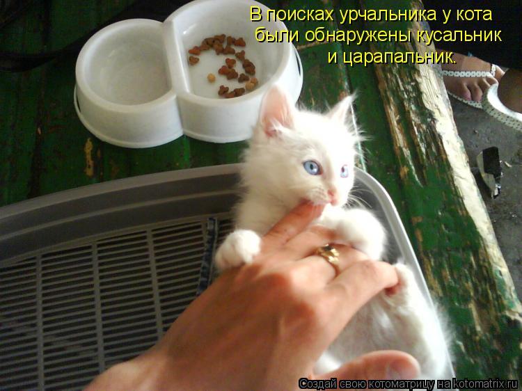 Котоматрица: В поисках урчальника у кота были обнаружены кусальник и царапальник.
