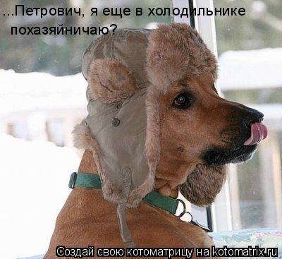 Котоматрица: ...Петрович, я еще в холодильнике  похазяйничаю?