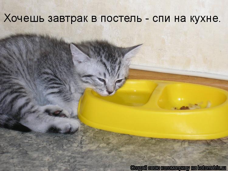 Котоматрица: Хочешь завтрак в постель - спи на кухне.