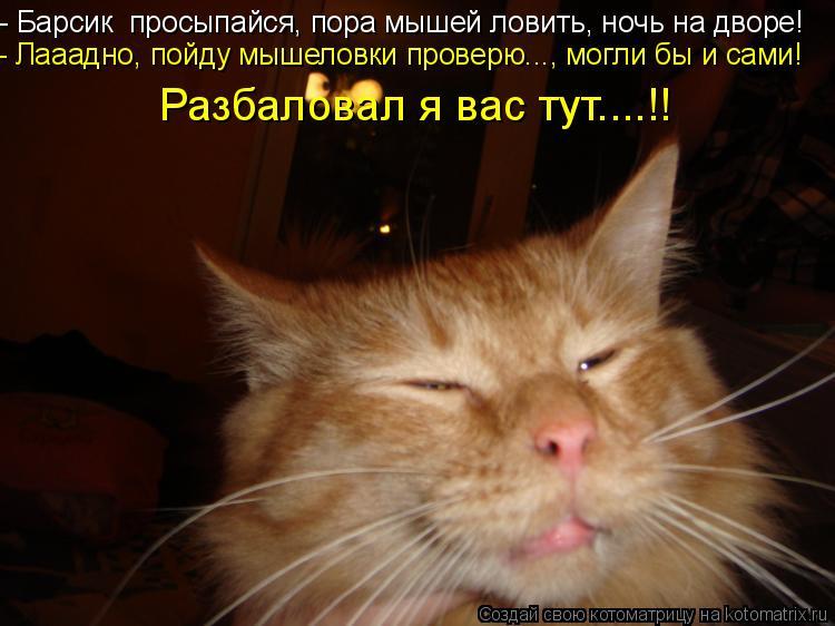 Котоматрица: - Барсик  просыпайся, пора мышей ловить, ночь на дворе! - Лааадно, пойду мышеловки проверю..., могли бы и сами! Разбаловал я вас тут....!!
