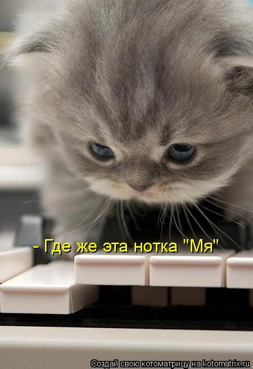 "Котоматрица: - Где же эта нотка ""Мя"""