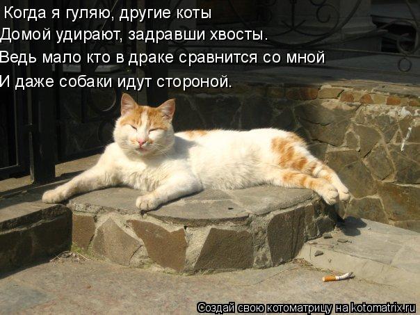 Котоматрица: Когда я гуляю, другие коты Домой удирают, задравши хвосты. Ведь мало кто в драке сравнится со мной И даже собаки идут стороной.