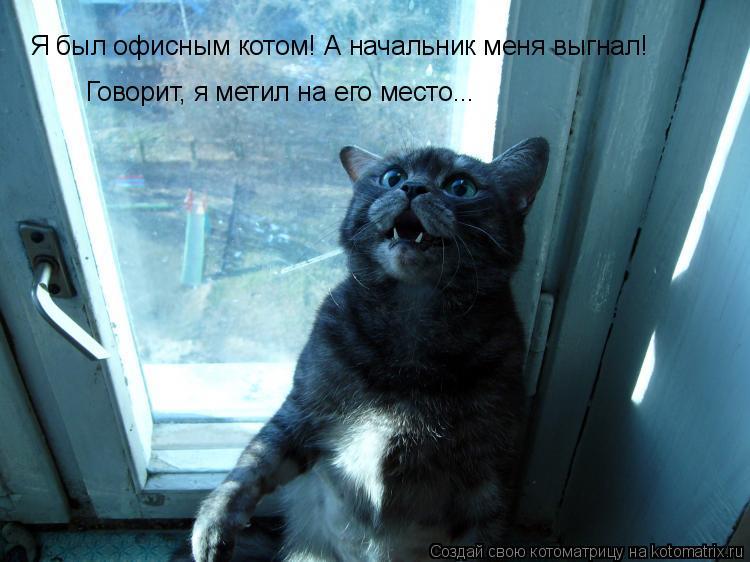 Я был офисным котом! А начальник меня выгнал! Говорит, я метил на его