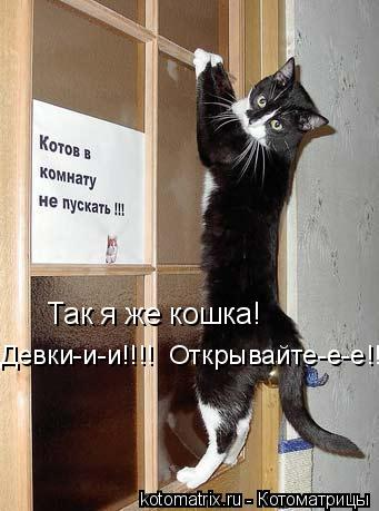 Котоматрица: Так я же кошка!  Девки-и-и!!!!  Открывайте-е-е!!!!