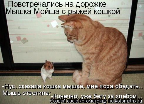 Котоматрица: Повстречались на дорожке Мышка Мойша с рыжей кошкой -Нус..сказала кошка мышке, мне пора обедать.. Мышь ответила: -Конечно..уже бегу за хлебом..